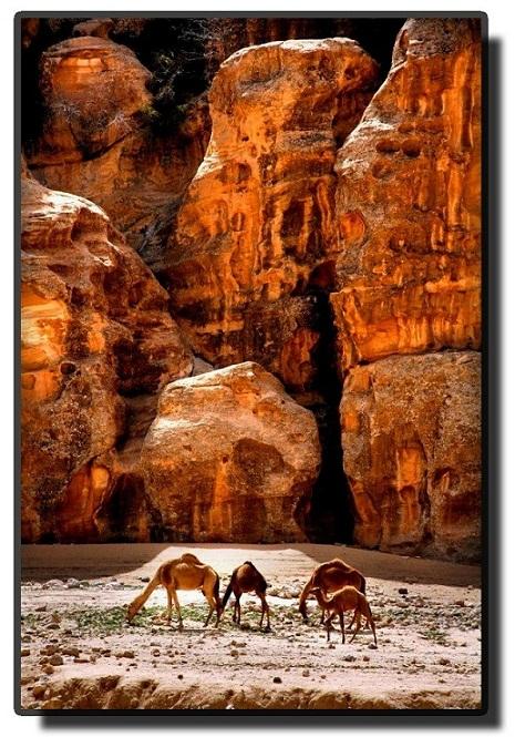 Вади Рам - Жизни в пустыне